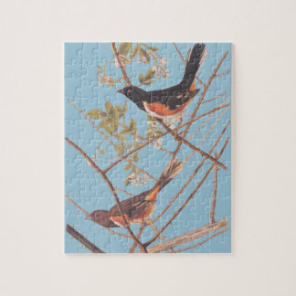 Audubon's Towee Bunting Puzzle