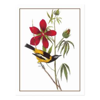Audubon's Troupial Postcard