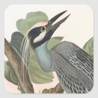 Audubon's Yellow-crowned Heron Square Sticker
