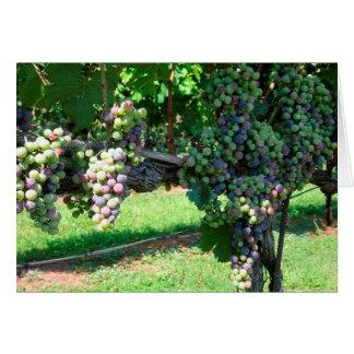 August sun ripens wine grapes blank card