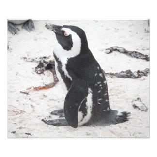 Aumentación Fotográfica Pingüinos Fotografías