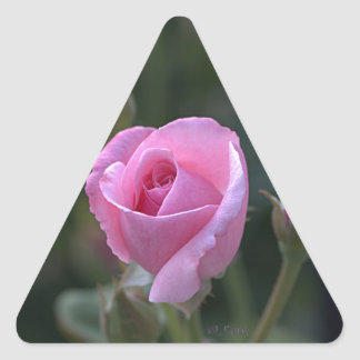 Aunt Dorothy's Pink Rose Triangle Stickers