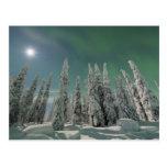 Aurora Borealis Postcards