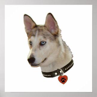 Ausky Dog Pawprint Heart Poster