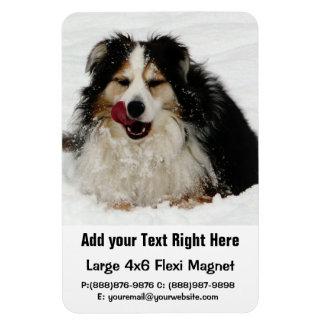 Aussie Dog Tongue Rectangular Magnet
