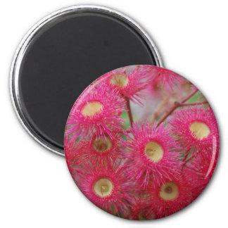 Aussie Gum Blossom 6 Cm Round Magnet