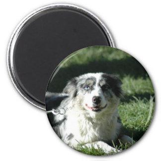Aussie Herd Dog Magnet Magnet