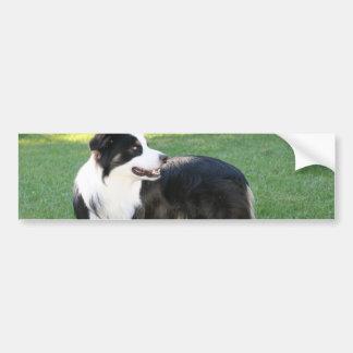 Aussie Shepherd Bumper Stickers