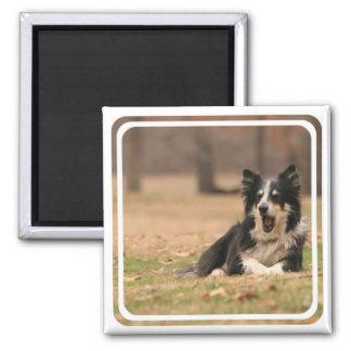 Aussie Shepherd Dog  Magnet Fridge Magnet