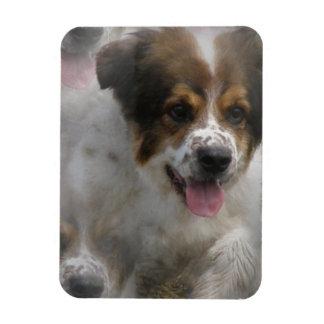 Aussie Shepherd Puppy Premium Magnet Rectangle Magnets