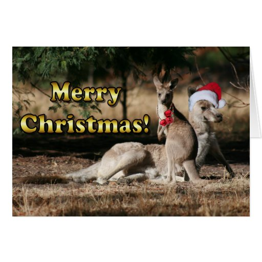 Aussie Style Christmas Kangaroos Greeting Card | Zazzle
