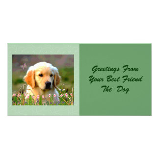 Austin The Golden Labrador Customised Photo Card