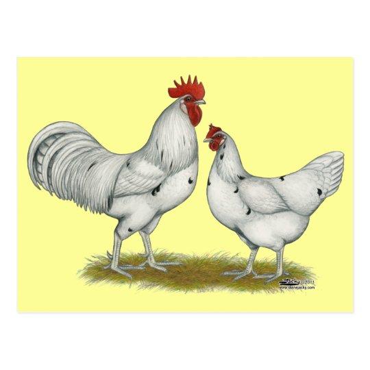 Austra White Chickens Postcard