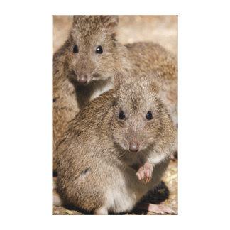 Australia, Adelaide. Cleland Wildlife Park Canvas Print