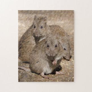 Australia, Adelaide. Cleland Wildlife Park Jigsaw Puzzle
