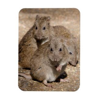 Australia, Adelaide. Cleland Wildlife Park Magnet