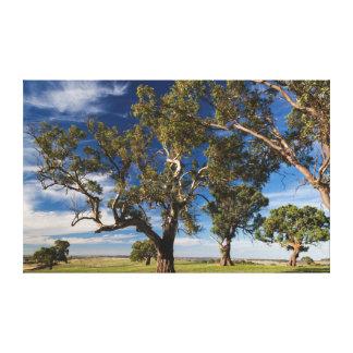 Australia, Barossa Valley, Mount Pleasant Canvas Print