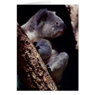 Australia, Close-Up of Koala (Phascolarctos Card