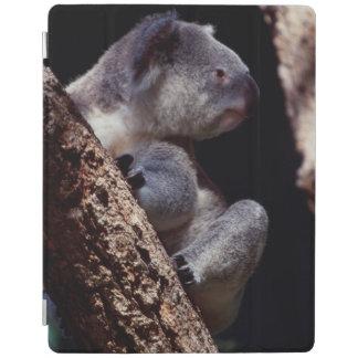 Australia, Close-Up of Koala (Phascolarctos iPad Cover