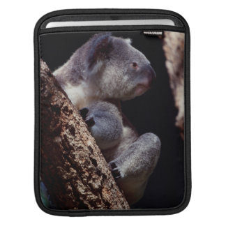 Australia, Close-Up of Koala (Phascolarctos iPad Sleeves