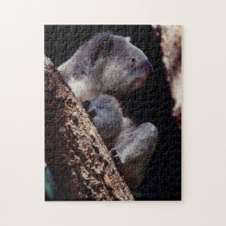 Australia, Close-Up of Koala (Phascolarctos Jigsaw Puzzle