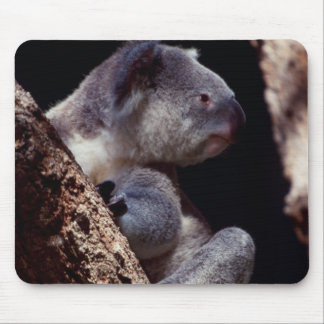 Australia, Close-Up of Koala (Phascolarctos Mouse Pad