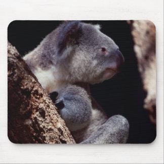Australia, Close-Up of Koala (Phascolarctos Mouse Pad