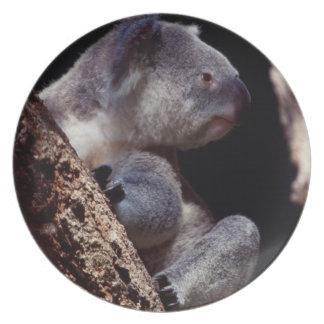 Australia, Close-Up of Koala (Phascolarctos Party Plate