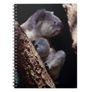 Australia, Close-Up of Koala (Phascolarctos Spiral Note Books