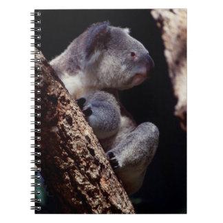 Australia, Close-Up of Koala (Phascolarctos Spiral Notebook