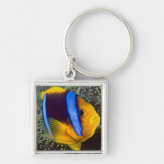 Australia, Great Barrier Reef, Anemonefish Key Ring