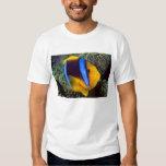 Australia, Great Barrier Reef, Anemonefish Shirts