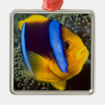 Australia, Great Barrier Reef, Anemonefish Silver-Colored Square Decoration