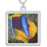 Australia, Great Barrier Reef, Anemonefish Square Pendant Necklace