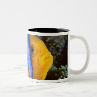 Australia, Great Barrier Reef, Anemonefish Two-Tone Mug