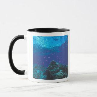 Australia, Great Barrier Reef. Swarming Purple Mug