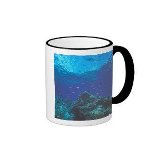 Australia, Great Barrier Reef. Swarming Purple Ringer Coffee Mug