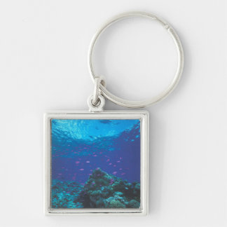 Australia, Great Barrier Reef. Swarming Purple Silver-Colored Square Key Ring