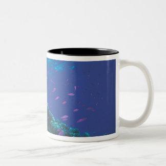 Australia, Great Barrier Reef. Swarming Purple Two-Tone Coffee Mug