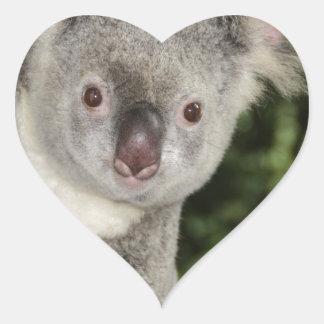 Australia koala bear cute animal heart sticker