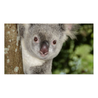 Australia koala bear cute animal pack of standard business cards