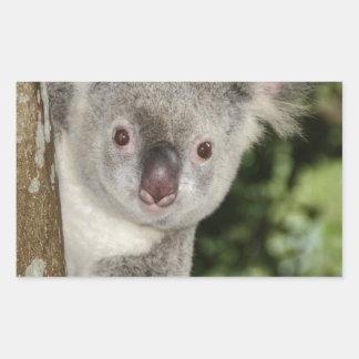 Australia koala bear cute animal rectangular sticker