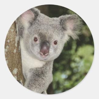 Australia koala bear cute animal round sticker