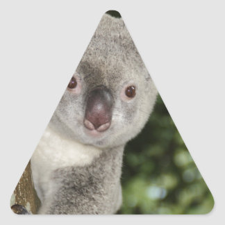 Australia koala bear cute animal triangle sticker