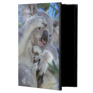 Australia, Koala Phasclarctos Cinereus) Case For iPad Air