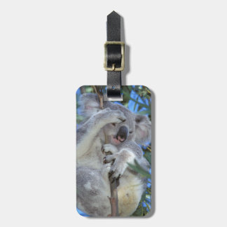 Australia, Koala Phasclarctos Cinereus) Luggage Tag