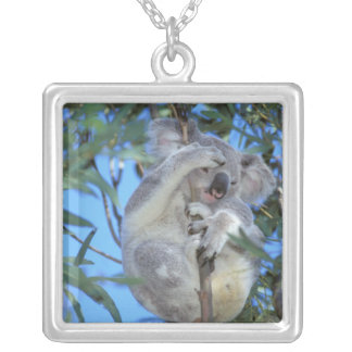 Australia, Koala Phasclarctos Cinereus) Silver Plated Necklace
