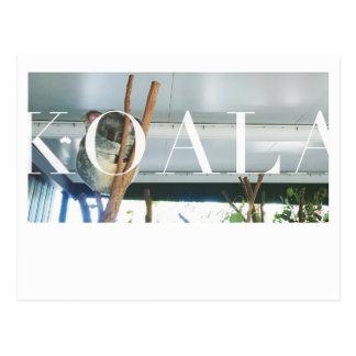 Australia Koala Post Card