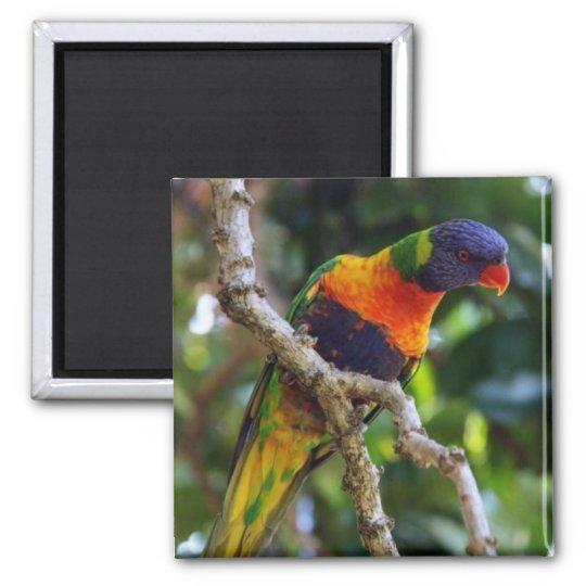 Australia: Lorikeet Bird refrigerator magnet