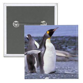 Australia, Macquarie Island, Buckles Bay. King 15 Cm Square Badge